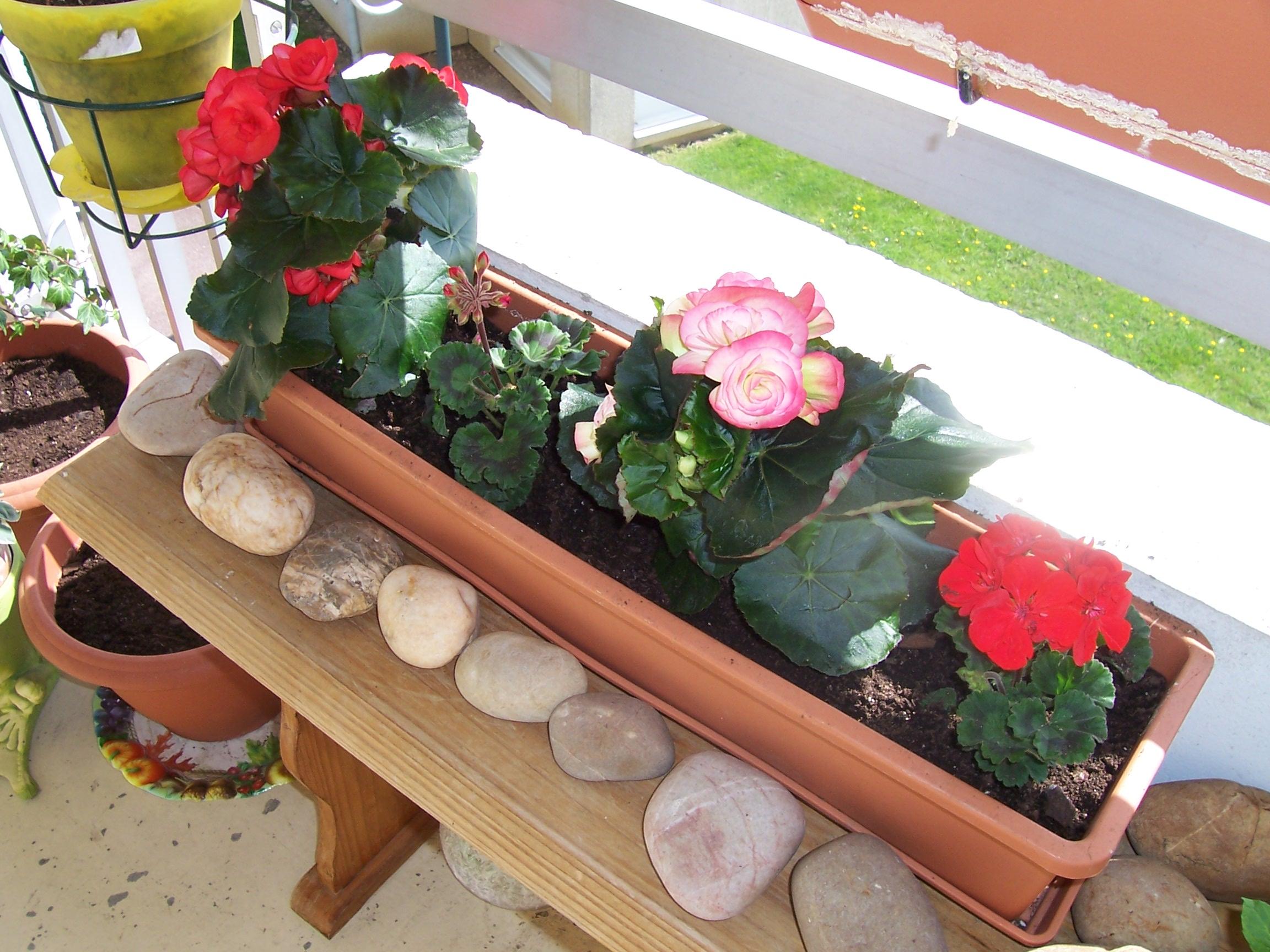 Portfolio bichette des fleurs pour mon p re - Au jardin de mon pere les lilas sont fleuris ...